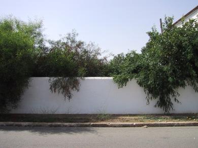 Tapia jardín